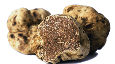 White Truffles/Magnatum Pico- 50 g -Lands Next Thursday 28 Nov